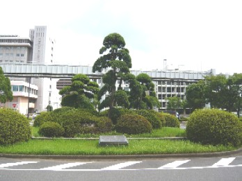 chibashi2.JPG