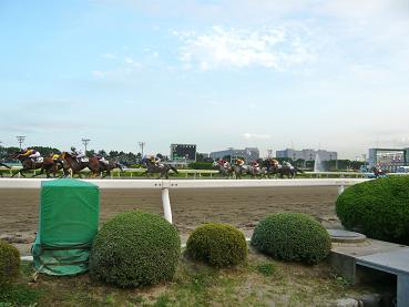 racemae7.JPG