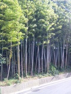 takeyabu1.jpg