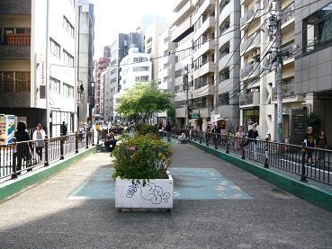 catstreet4.JPG